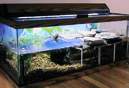Water Heater For Turtle Tank : amboinensis vivarium