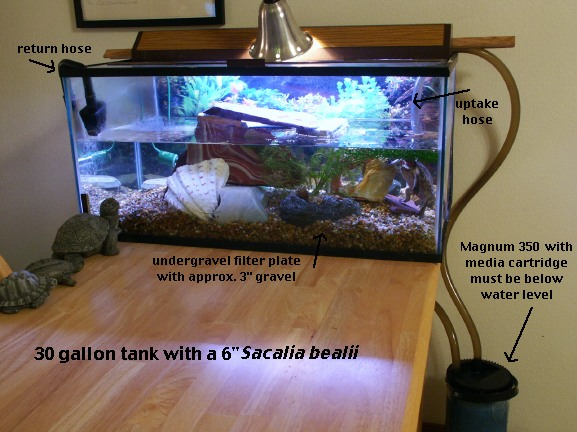 Water Turtle Tank Setup