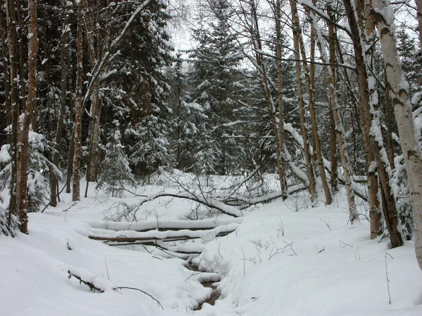 Bonne Mercredi 2-11-new-snow